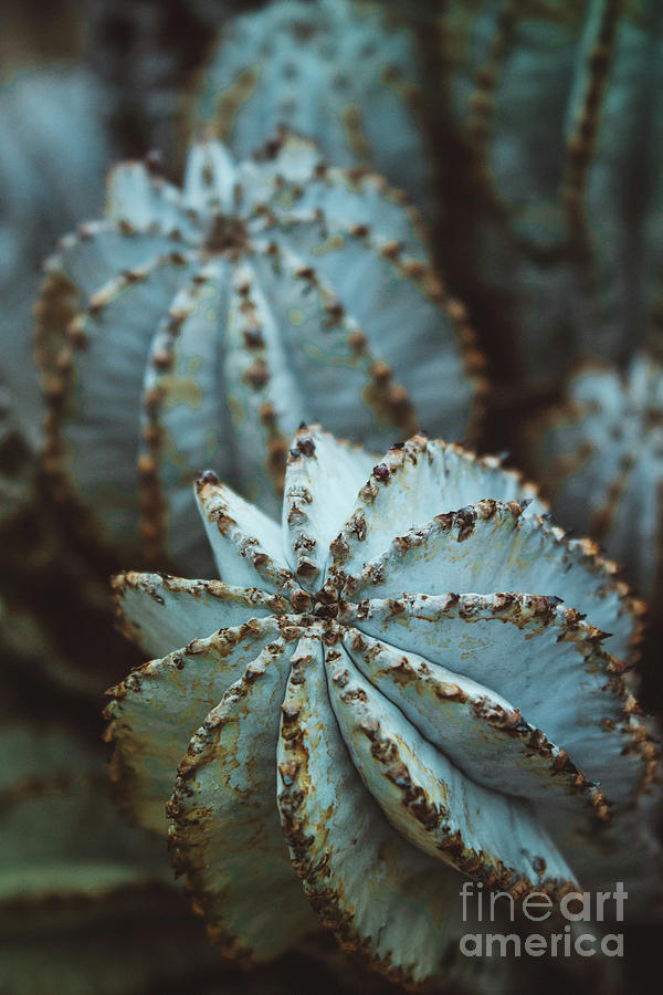 Ball Cactus by Colleen Kammerer