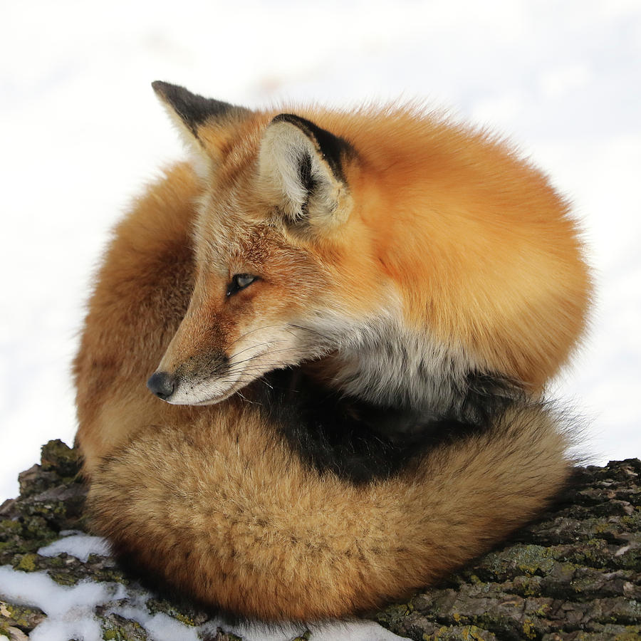 Ball Of Fur by Doris Potter