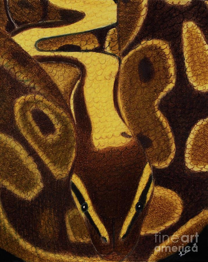 Ball Python Snake by Dorothy Lee