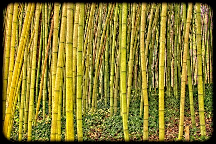 Bamboo by Allen Nice-Webb