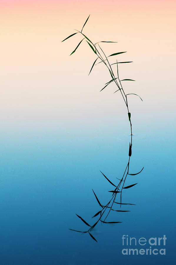 Bamboo Grass Photograph - Bamboo Grass Reflection by Tim Gainey