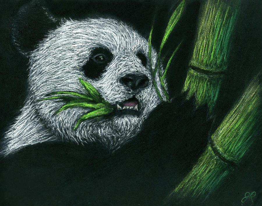 Bamboo Panda Drawing