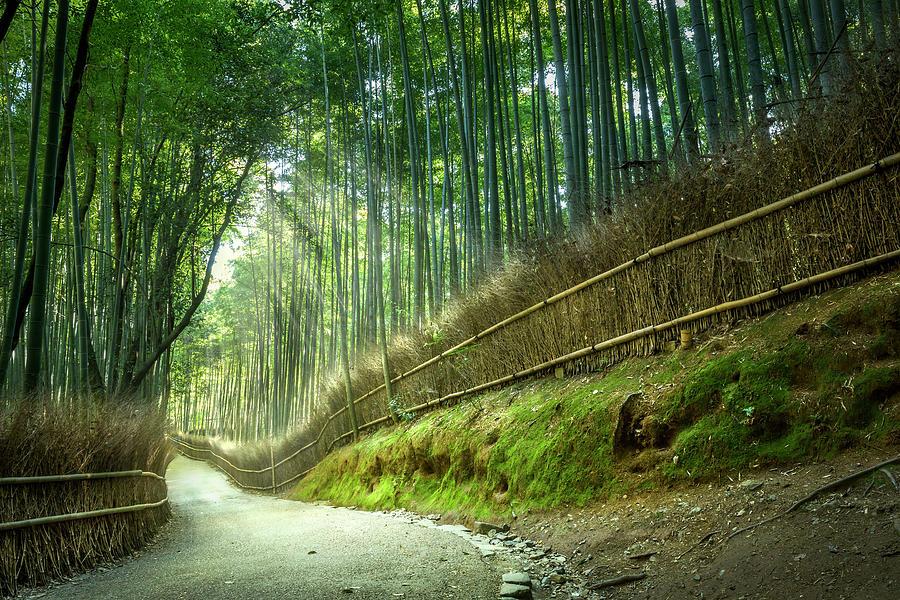 Bamboo Park, Kyoto, Japan Photograph by Yustinus