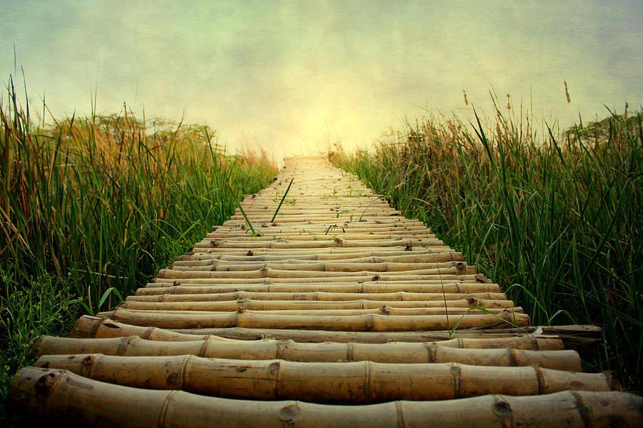Bamboo Path In Grass At Sunrise Photograph by Atul Tater