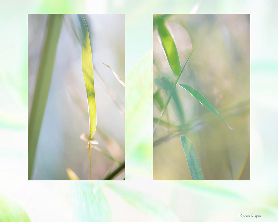 Bamboo by Philip Karen