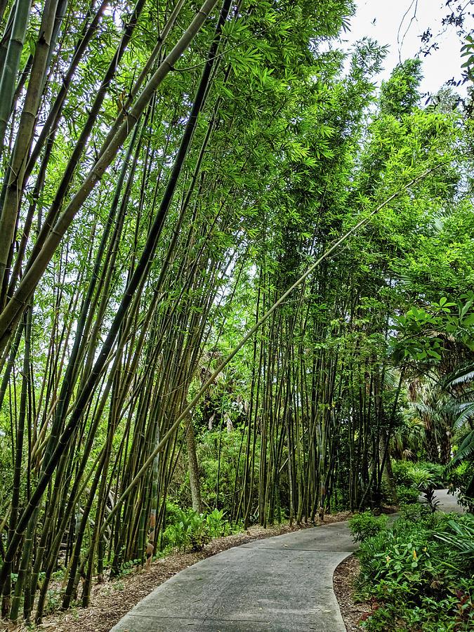 Bamboo Walk by Portia Olaughlin