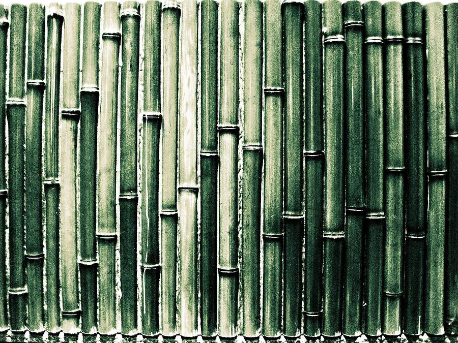 Bamboo Wall Photograph by M.taka