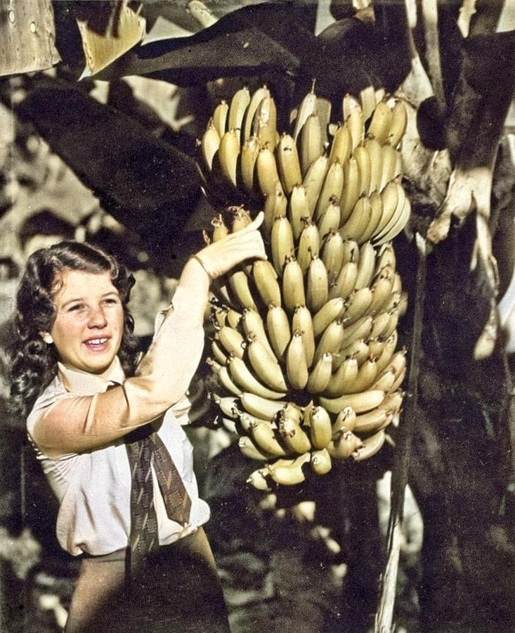 Bananas, C 1930 Painting