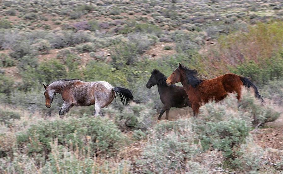 Band of Mustangs by Sagittarius Viking