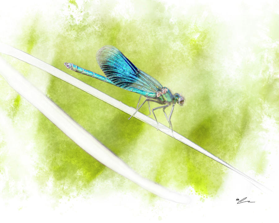 Banded wings by Starsphinx