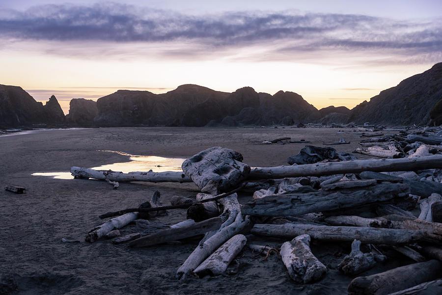 Bandon Driftwood by Steven Clark