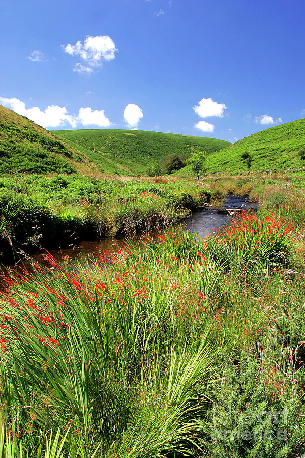 Montbretia Photograph - Bank Of The River Barle by Dr Keith Wheeler/science Photo Library
