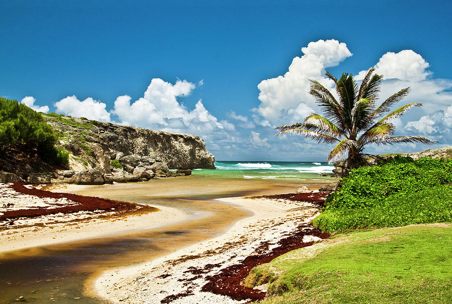 Barbados Coastline Photograph by Christopher Kimmel