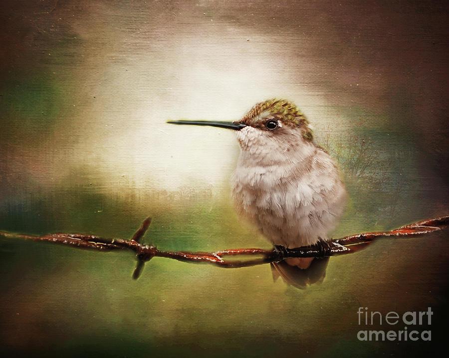 Hummingbird Photograph - Barbed Wire Hummingbird Perch by Karen Beasley
