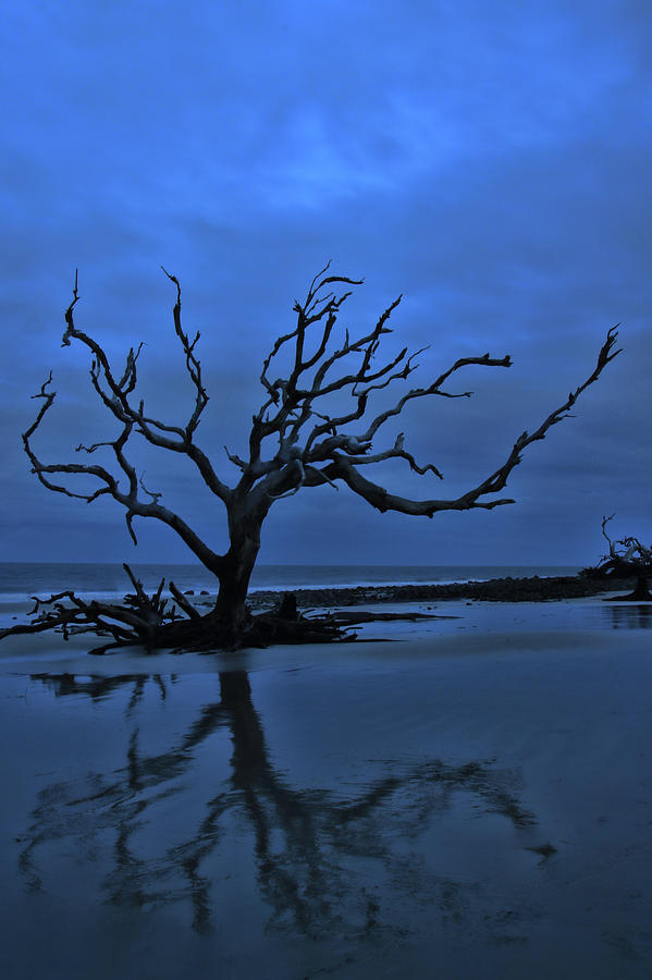 Bare and Blue by Mary Buck