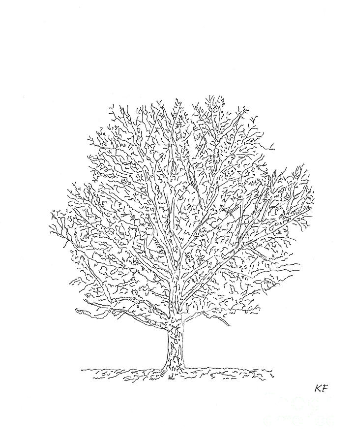 Bare Branches 2 - A Pen and Ink Drawing by Kerri Farley