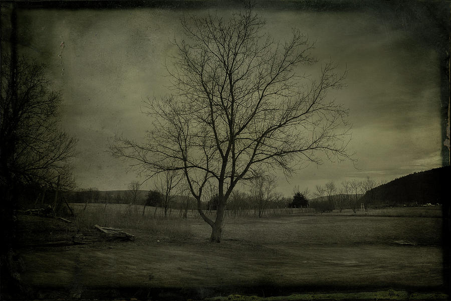 Bare Tree In A Pasture Photograph by Win-initiative