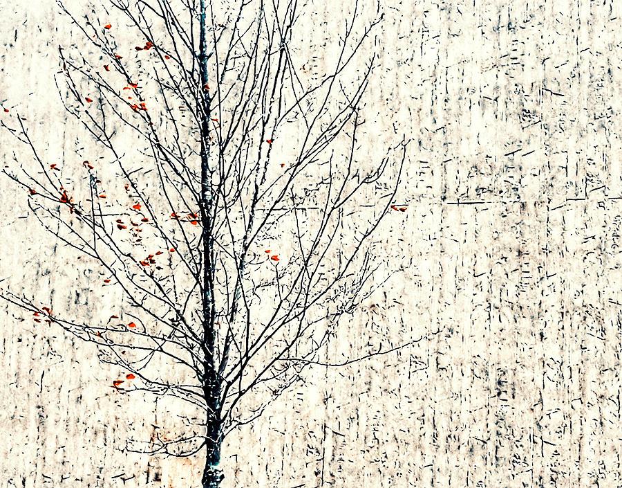 Bare Tree Photograph