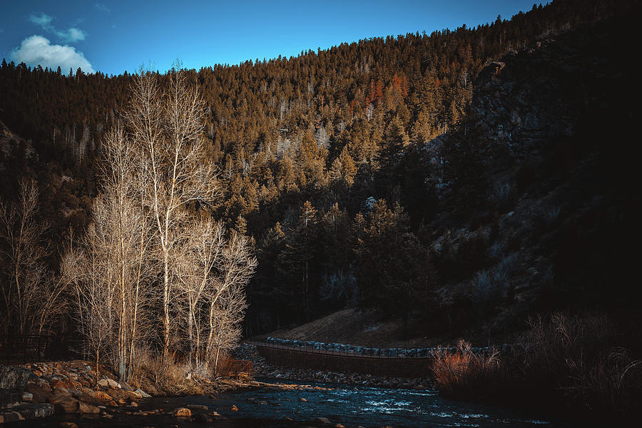 Bare Trees In Clear Creek Canyon by Jeanette Fellows