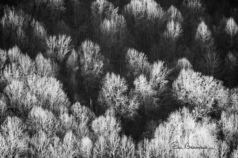 Bare Trees Shenandoah Valley 4259 by Dan Beauvais