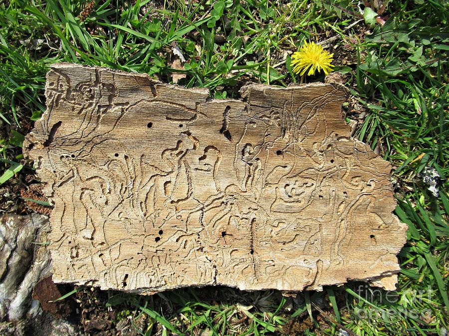 Bark, dandelion and grass by Chani Demuijlder