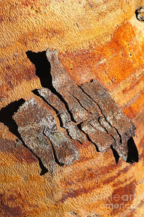 Bark Of Australian Flowering Gum by Joy Watson