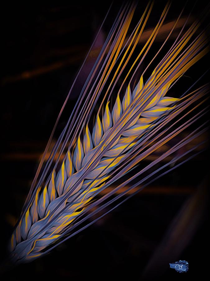 Barley Mixed Media