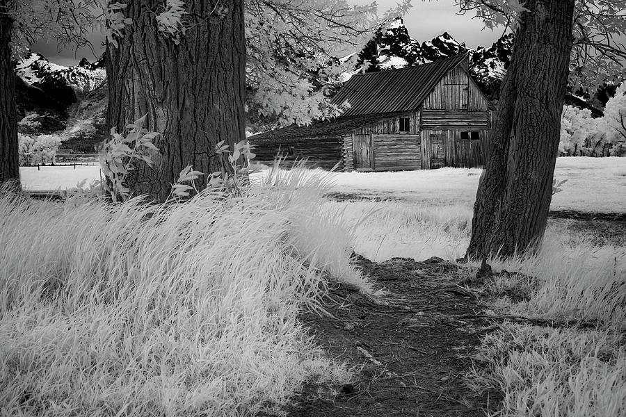 Tetons Photograph - Barn Between Trees by Jon Glaser
