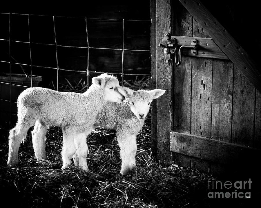 Barn Friends by Alana Ranney
