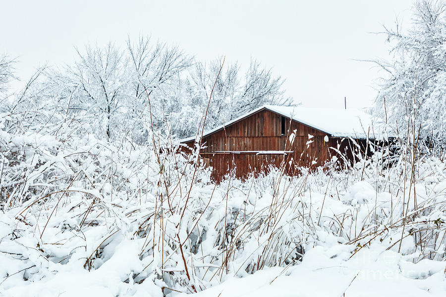 Barn in the Snowy Landscape by Terri Morris