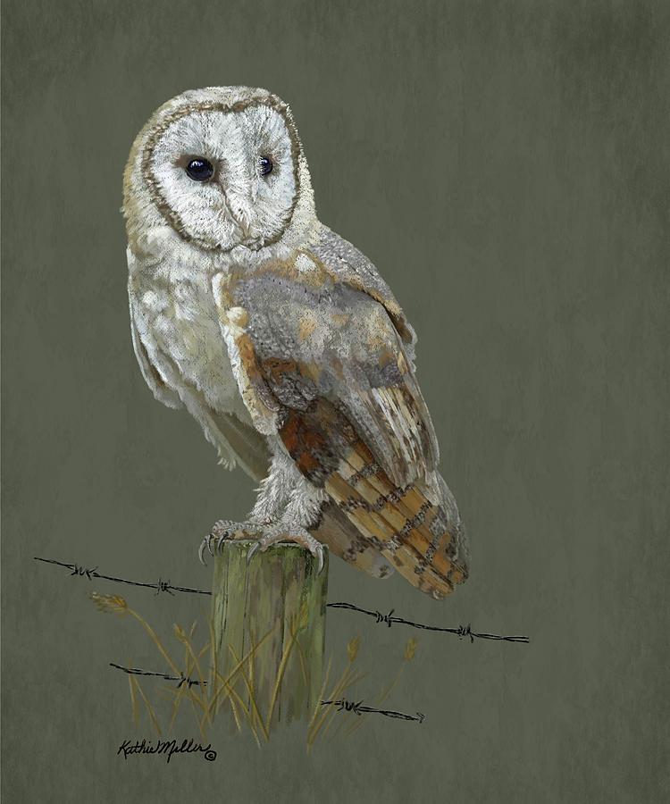 Barn Owl by Kathie Miller