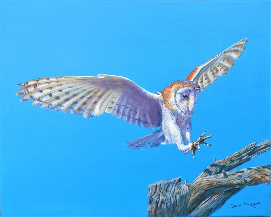 Barn Owl Landing by John Neeve