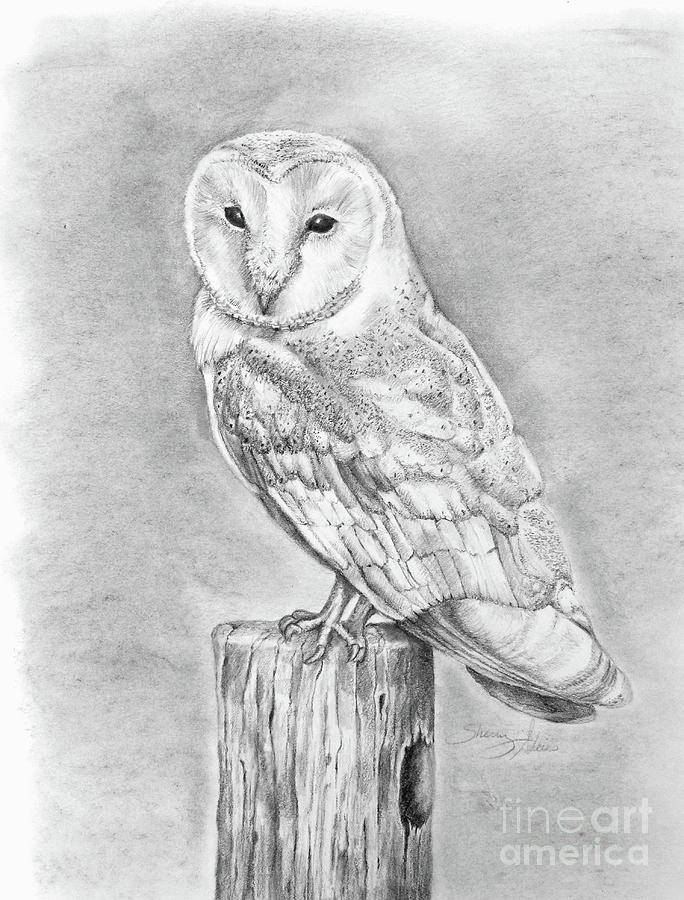 Original Pencil Drawing Animal Art Barn Owl Wildlife art Wildlife owls Family Home Decor