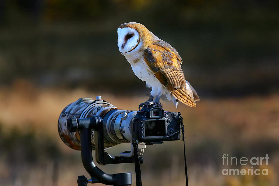 Big Photograph - Barn Owl Tyto Alba Sitting On A Camera by Don Mammoser