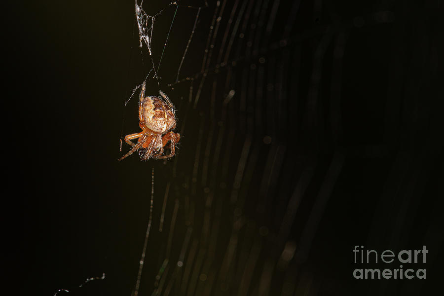 barn Spider by Brian Roscorla