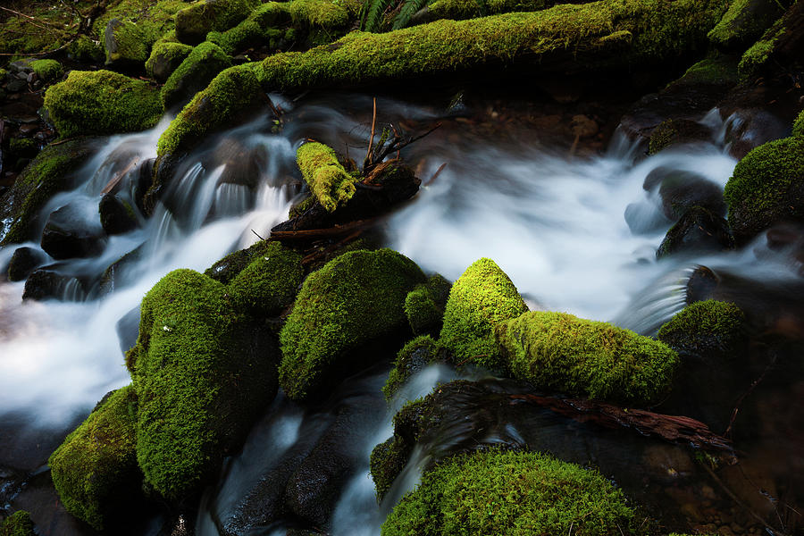 Barnes Creek With Water Flowing Over Photograph by Mint Images - Art Wolfe