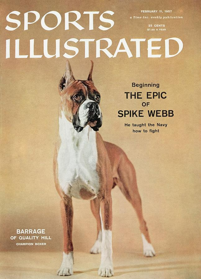 Barrage Of Quality Hill, 1955 Westminster Kennel Club Dog Sports Illustrated Cover Photograph by Sports Illustrated