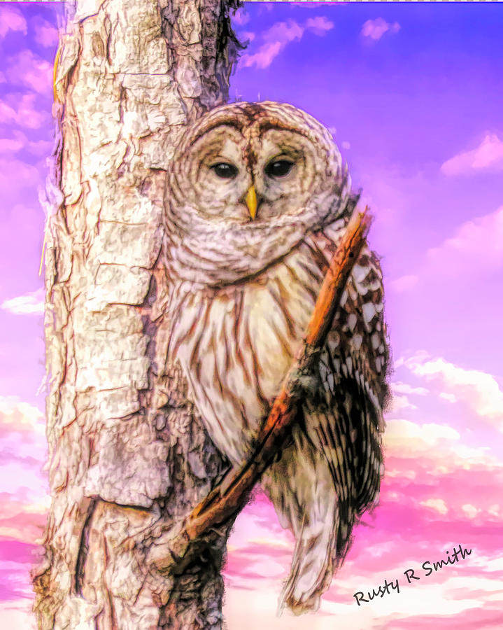 Barred owl perching on a limb. by Rusty R Smith