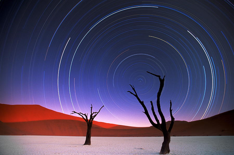 Barren Acacia Trees Acacia Horrida Photograph by Art Wolfe