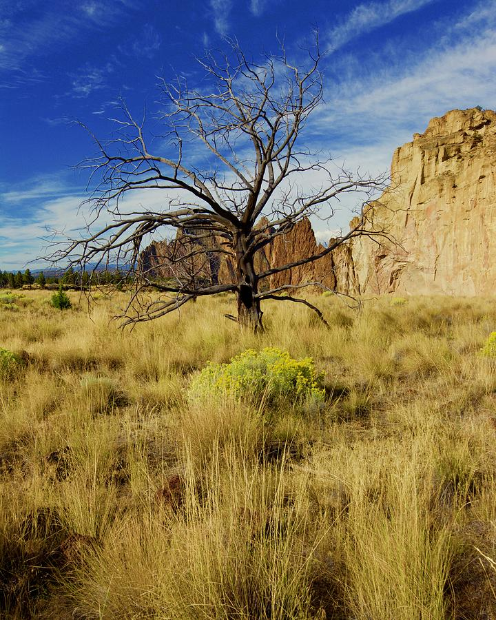 Barren Tree at Smith Rock by Todd Kreuter