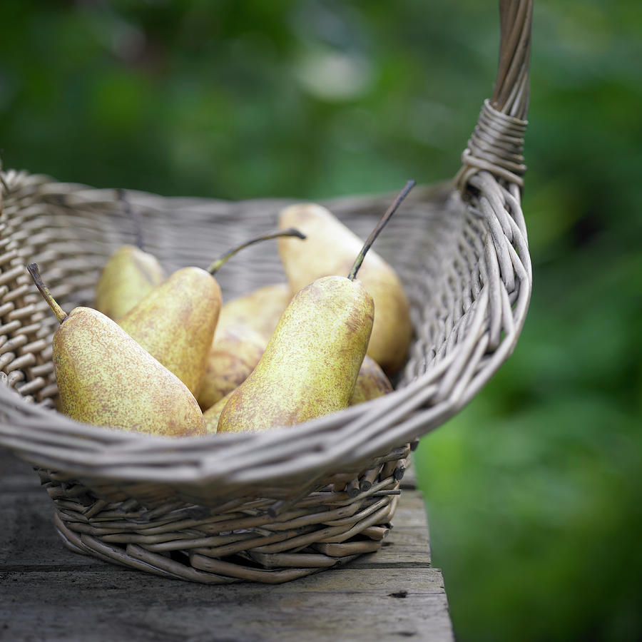 Basket Of Freshly Picked Pears Photograph by Dougal Waters