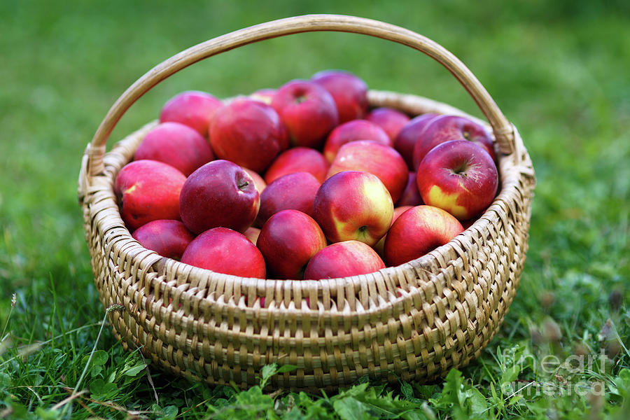 Basket with apples in the grass by Catalin Petolea