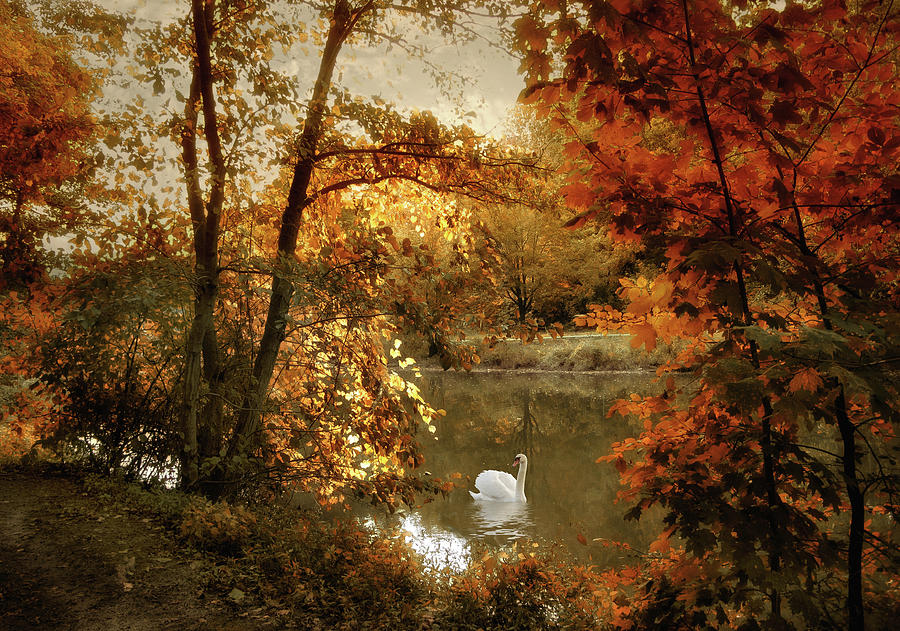 Autumn Photograph - Basking In Autumn by Jessica Jenney