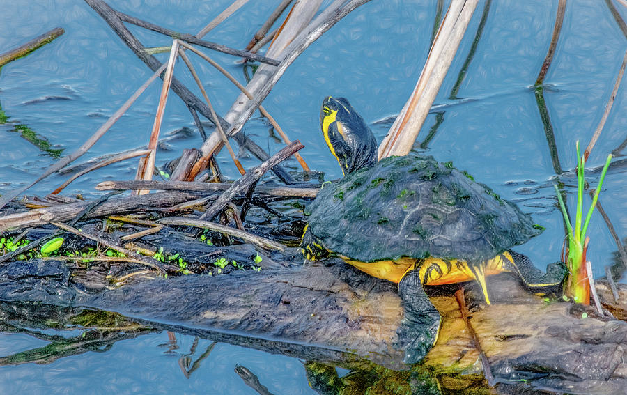 Basking Turtle by Marcy Wielfaert