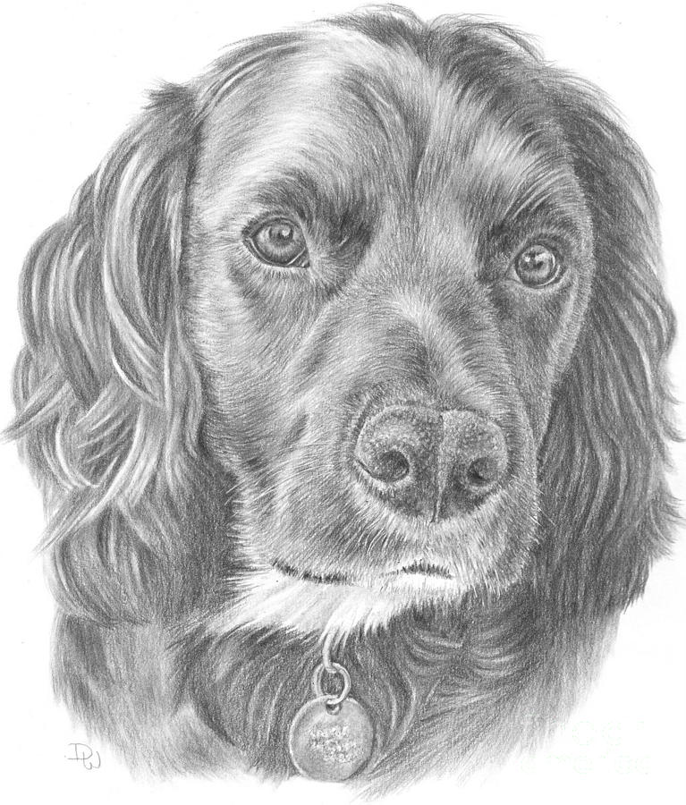 Baxter by Pencil Paws