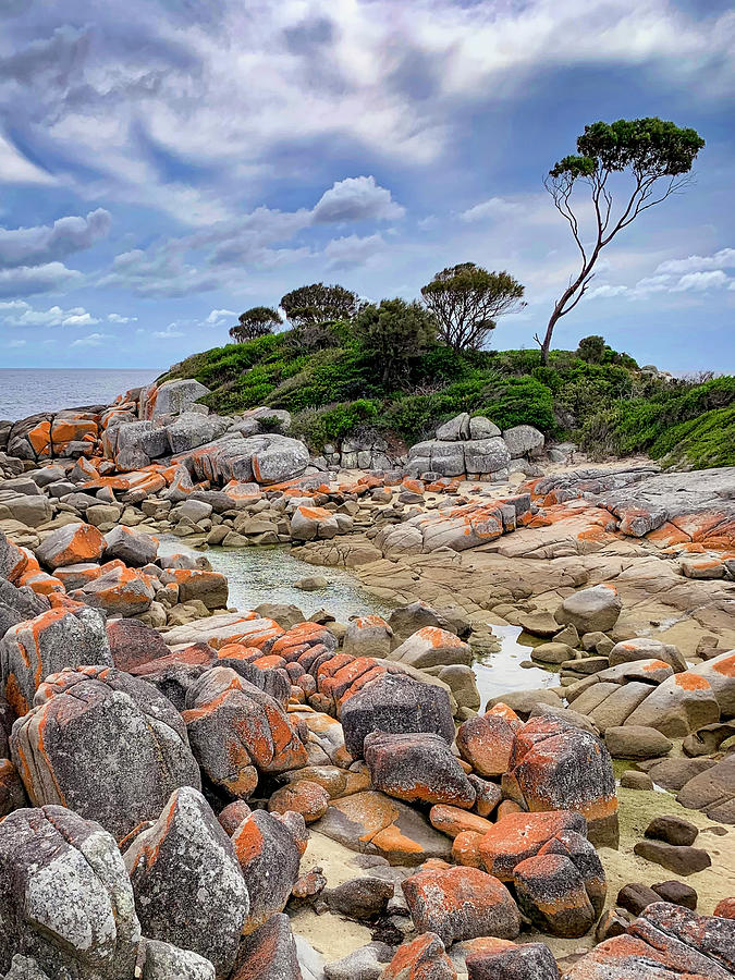 Bay of Fires - Tasmania - Australia by Tony Crehan