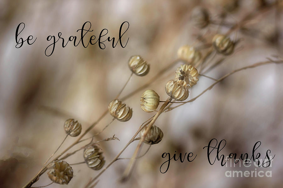 Be Grateful Give Thanks by Natural Abstract Photography