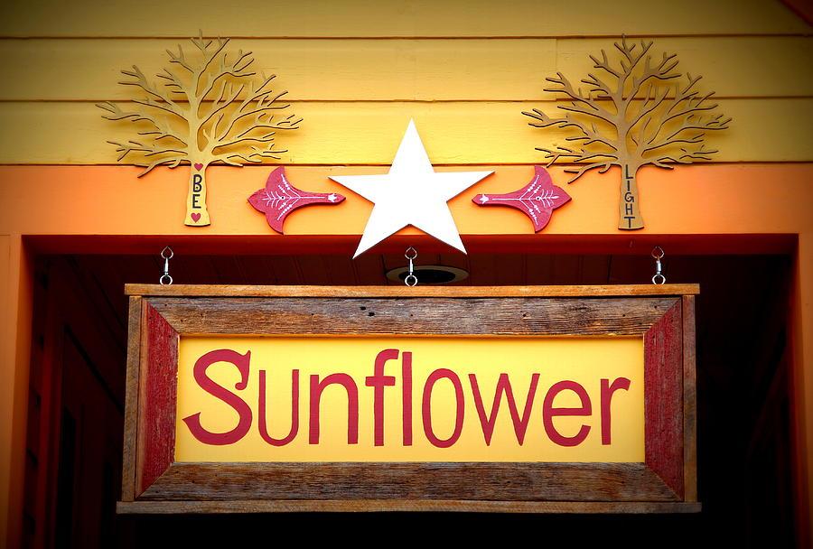 Be My Sunflower Photograph