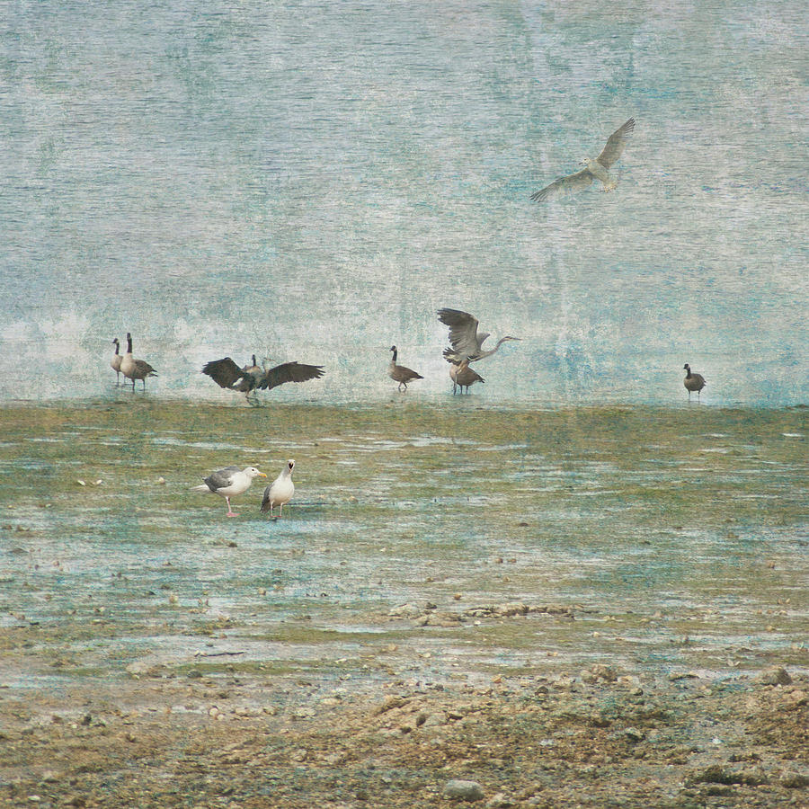 Beach and Birds by Barry Weiss