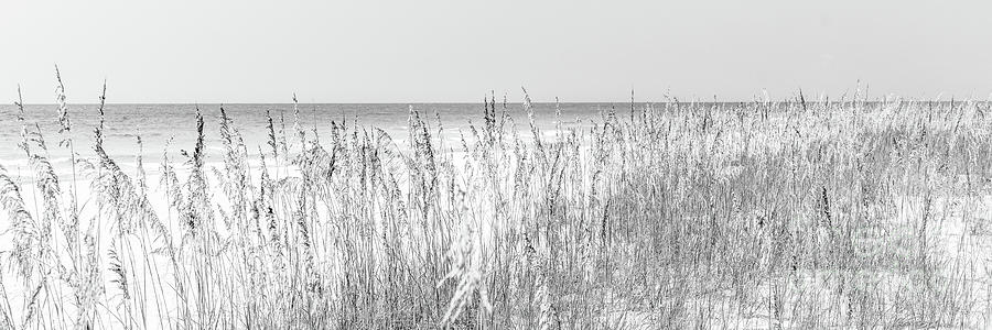 America Photograph - Beach Dune Grass And Sea Oats Black And White Panorama by Paul Velgos